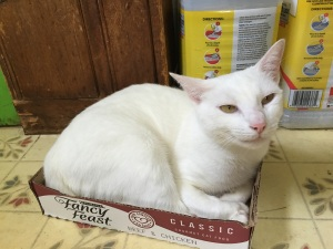 elsa-cat-food-box-5